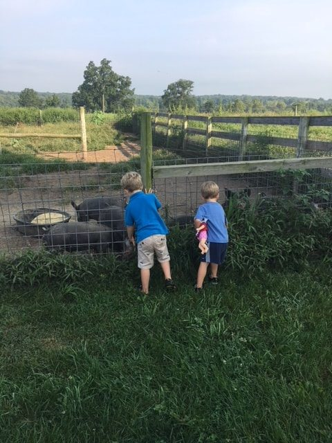 2 boys looking at pigs in a pen