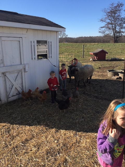 children with chickens